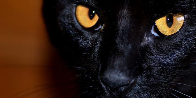 Рисунок 2 - У черных кошек плохая репутация