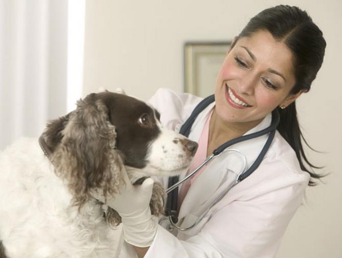 Рисунок 2 - На приеме у ветеринара