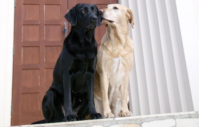 Рисунок 2 - Обнюхивание собак