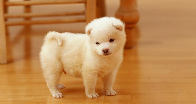 Рисунок 3 - Красивый щенок