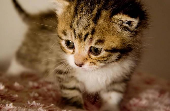 Рисунок 3 - Здоровый котенок