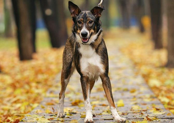 Рисунок 3 - Красивая собачка