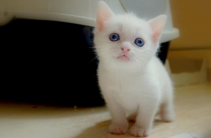 Рисунок 4 - Красивый котенок