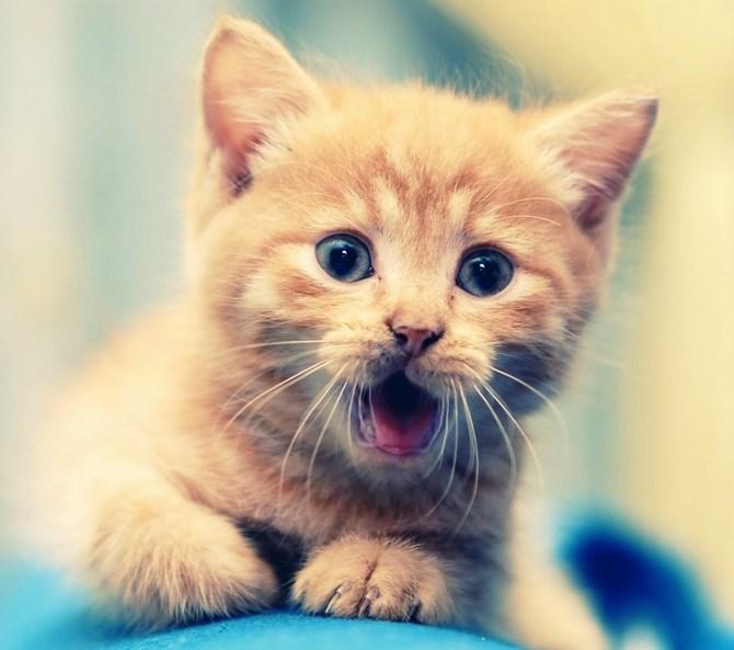 Рисунок 1 - Милый котенок