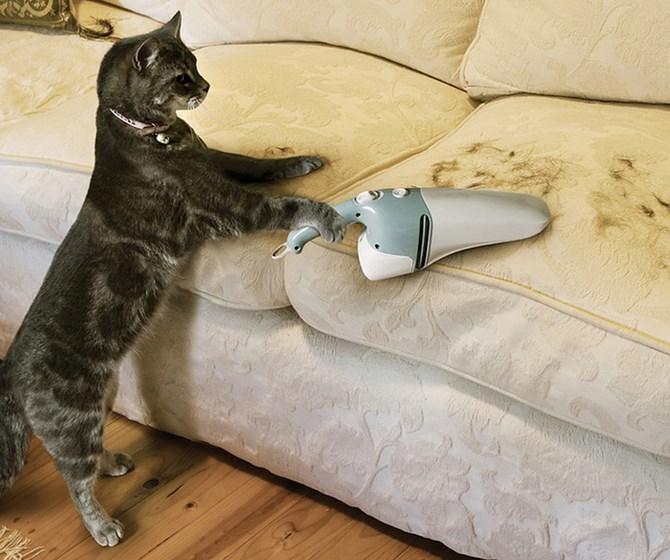 Рисунок 1 - Кошка убирает свою шерсть с дивана