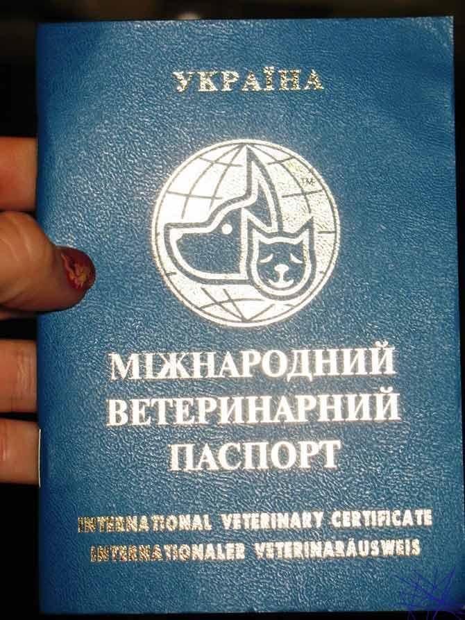 Рисунок 1 - Фотография международного ветеринарного паспорта