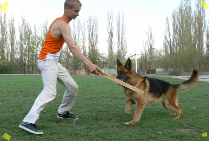 Рисунок 1 - Собака апортирует доску