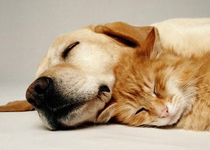Рисунок 2 - Кошечка и собачка