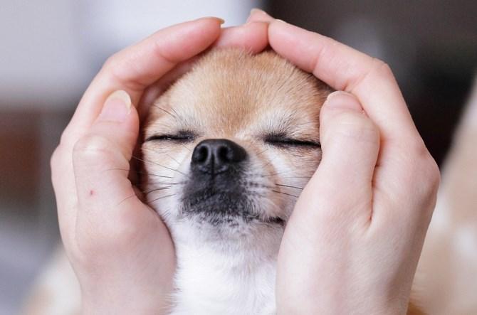 Рисунок 3 - Милая собачка