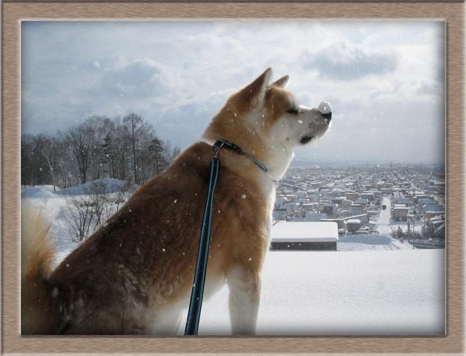 Рисунок 1 - Со снегом на носу
