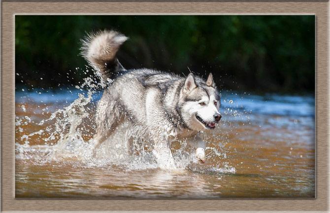 Рисунок 2 - Похож на волка