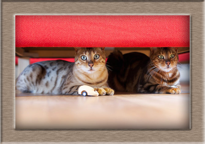 Рисунок 3 - Под диваном