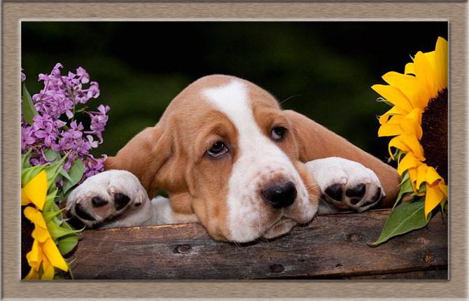 Рисунок 3 - Собачка с подсолнухами