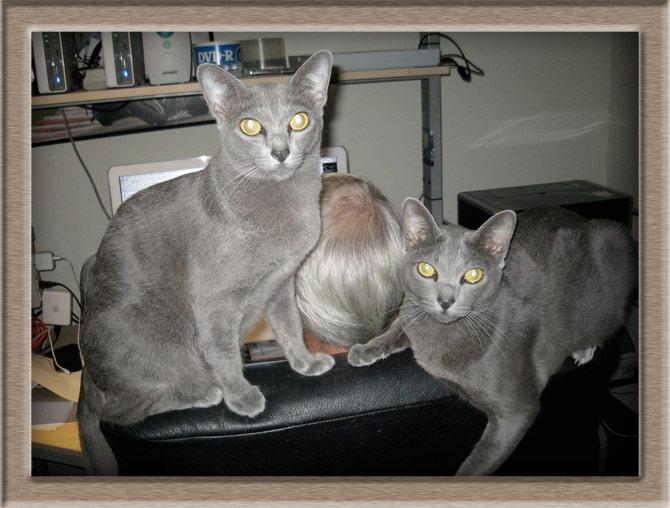 Рисунок 1 - Две кошки на спинке кресла