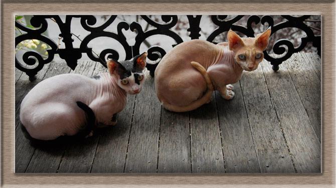 Рисунок 2 - Две кошки