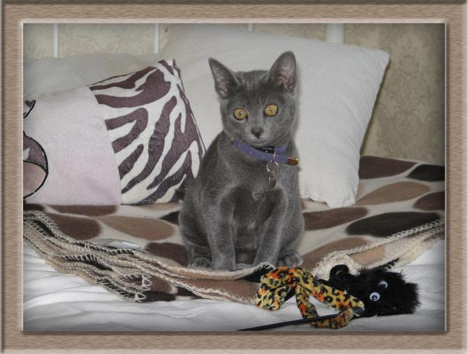 Рисунок 3 - Подрастающий котенок