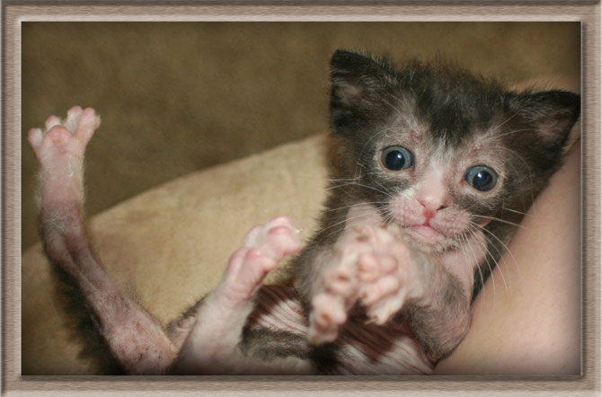 Рисунок 3 - Милый котенок