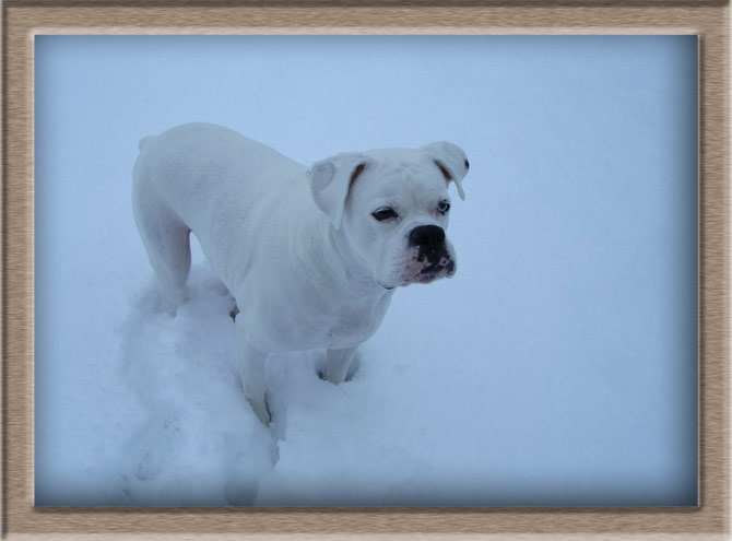 Рисунок 3 - Щенок на снегу