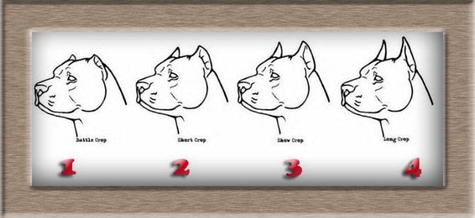 Рисунок 2 - Четыре вида купирования ушей