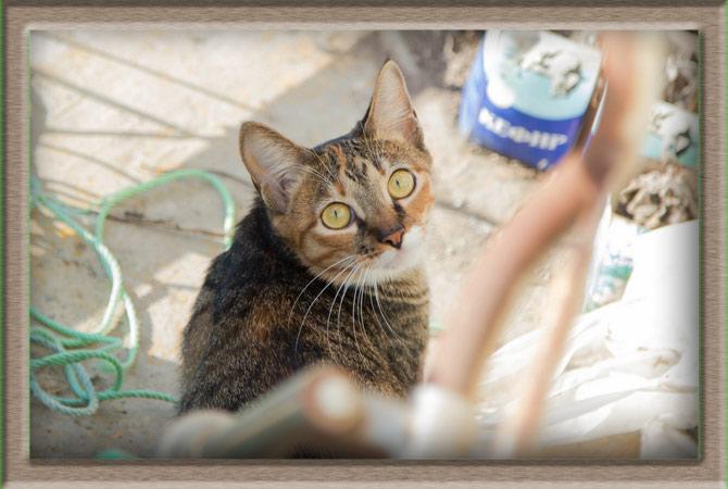 Рисунок 1 - Взгляд кошки