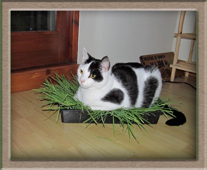 Рисунок 2 - Кошка в лотке