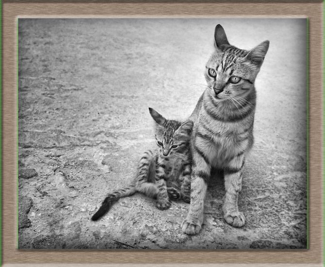 Рисунок 3 - Мать с котенком