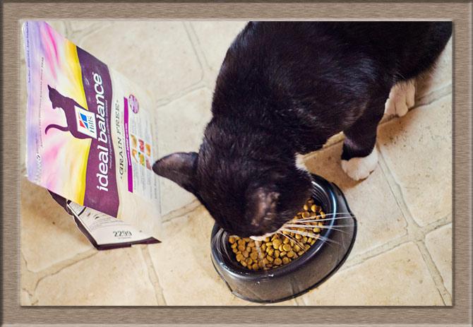 Рисунок 3 - Кошечка не может оторваться от миски